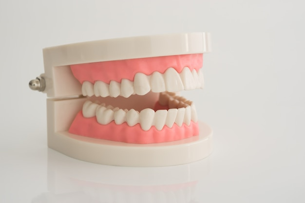 Kunstmatig tandheelkundig model