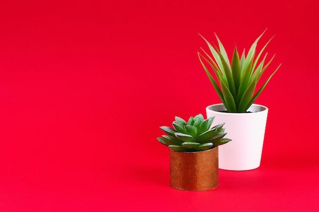 Kunstmatige groene succulent in een gouden pot van toilethoes op een rode bordeauxrode achtergrond,