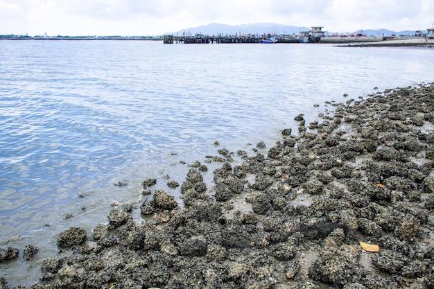 Kust met hele zeeschelpen en rotsen op zand, uitzicht op zee van houten brug poort en wolk