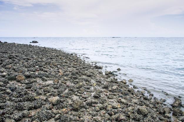 Kust met hele zeeschelpen en rotsen op zand