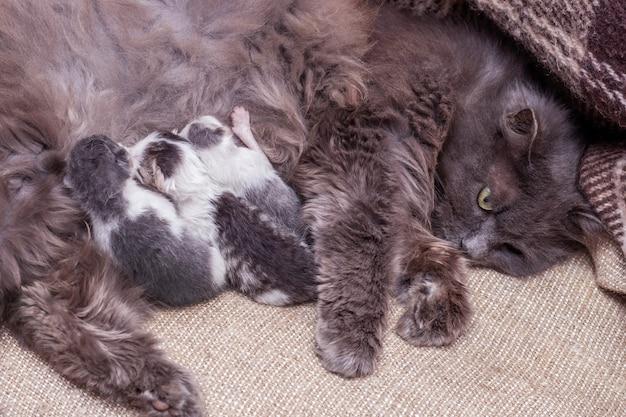 Kutje met pasgeboren kittens, kat voedt kittens