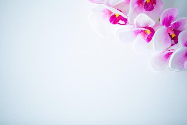 Kuuroord en wellnessscène, orchideebloem op de houten pastelkleur