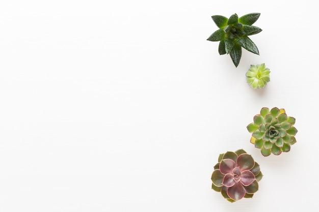 Kuuroordachtergrond met copyspace. spa wellness wenskaart. aromatherapie-thema, handgemaakte bio-cosmetica. plat leggen.