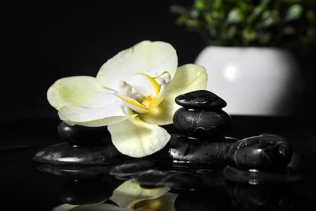 Kuuroordstenen en orchidee in water