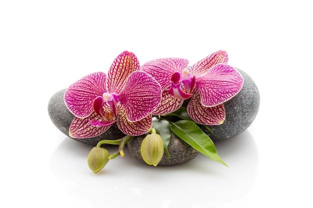 Kuuroordstenen en orchideebloemen