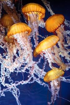 Kwallen met blauw oceaanwater