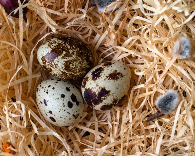 Kwarteleitjes in een nest close-up