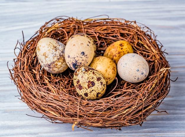 Kwarteleitjes in het nest