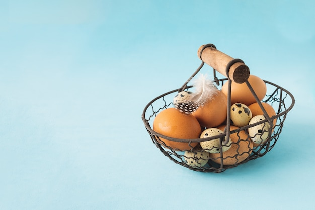 Kwartels en kippeneieren in metalen mand met veer op pastel blauwe achtergrond