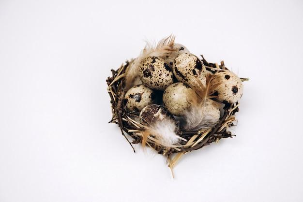 Kwartelseieren in een nest dat op witte achtergrond wordt geïsoleerd