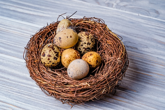 Kwartelseieren in een nest. vogeleieren in nest op rustieke houten.