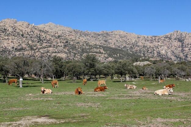 La pedriza is een grote granieten batholiet op de zuidelijke helling van de sierra de guadarrama
