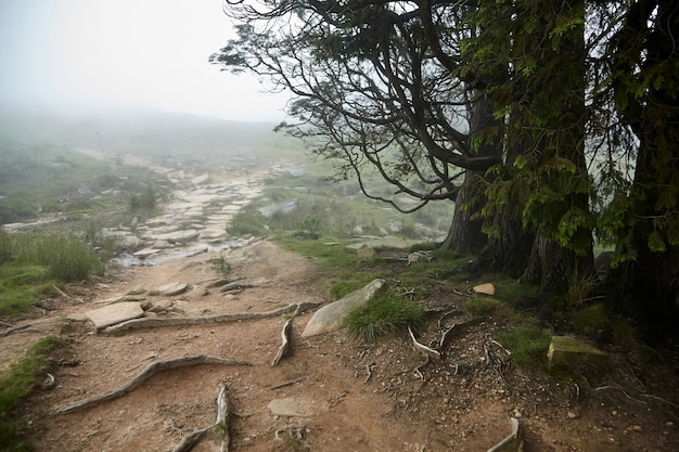 La rhune-wandelpad in mistig bos bij regenachtig weer