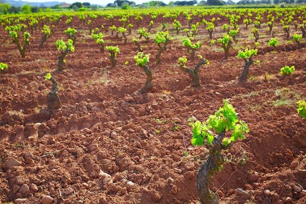 La rioja-wijngaard op de weg van saint james