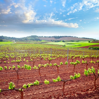 La rioja-wijngaardvelden op de weg van saint james