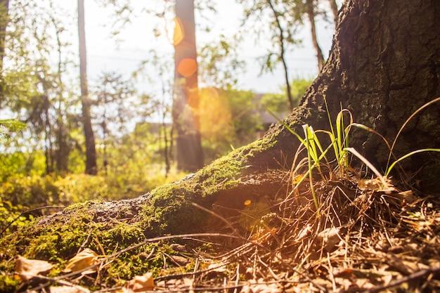 Laag gezichtspunt in natuurlandschap wazig natuurachtergrond kopie ruimte ecologie milieu