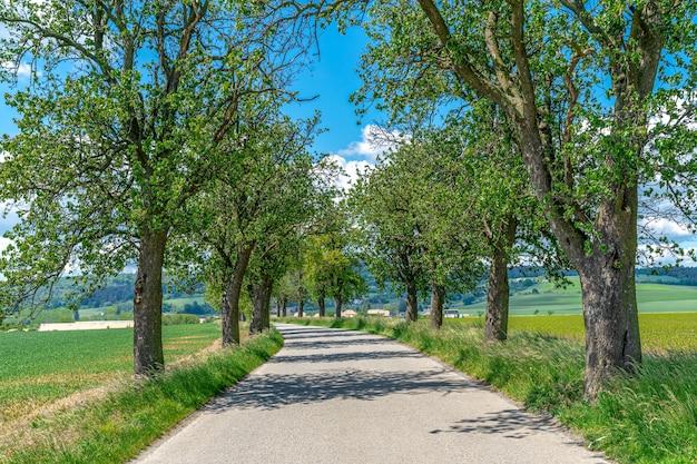 Laan van bomen langs de asfaltweg