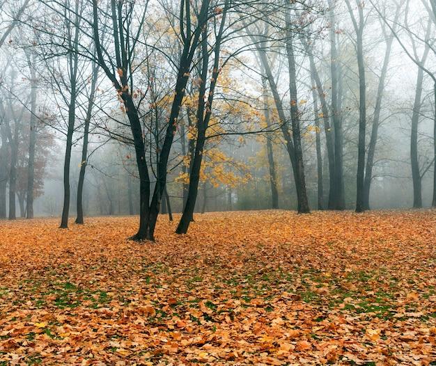 Laat in de herfst in het park, mistig weer bewolkt weer, loof viel van bomen