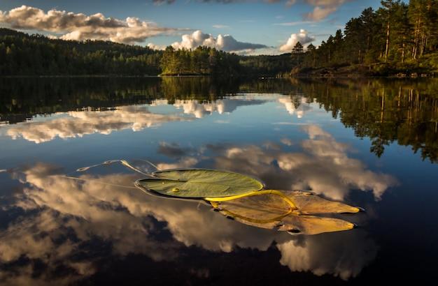 Laat op de dag worden wolken weerspiegeld op het gladde oppervlak van een zoetwatermeer in iveland, noorwegen