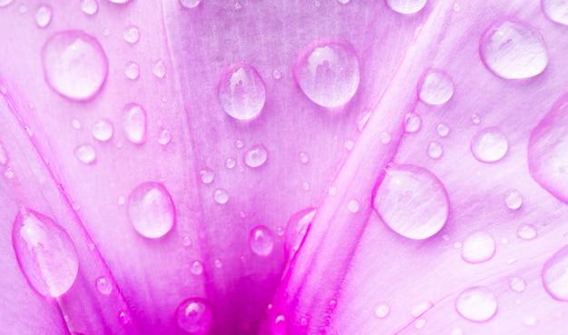 Laat water vallen op roze bloemclose-up