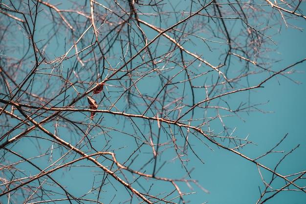 Laatste blad op de tak