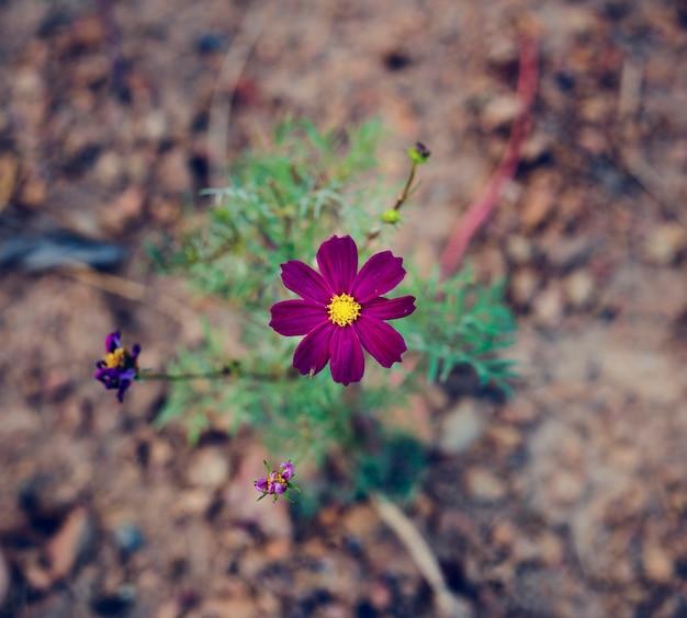 Laatste bloem op het land in luchtmening