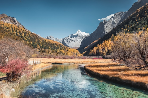 Laatste shangri-la van chana dorje-berg met dennenbos in de herfst in yading