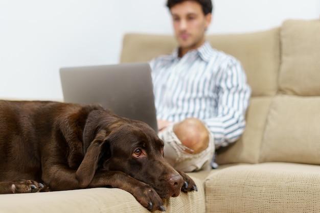 Labrador die naast een jonge zakenman ligt die met laptop op de bank thuis werkt