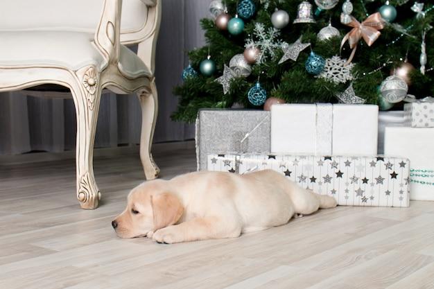 Labrador puppy naast geschenken onder de kerstboom