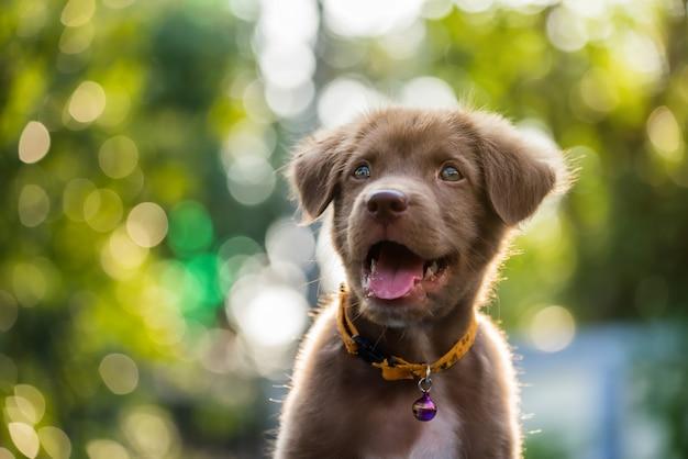 Labrador retriever-puppy met natuurlijke bokeh