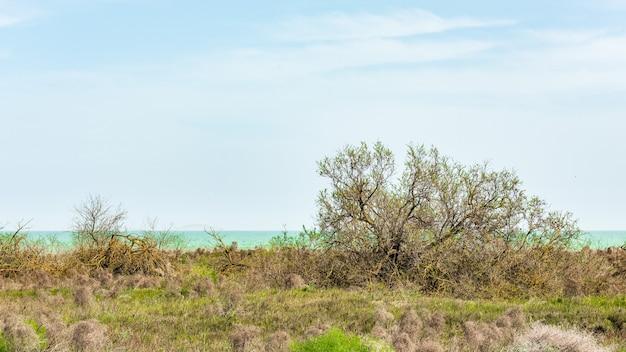 Lage bomen aan zee