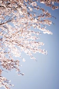 Lage hoek bloeiende lente bloemen