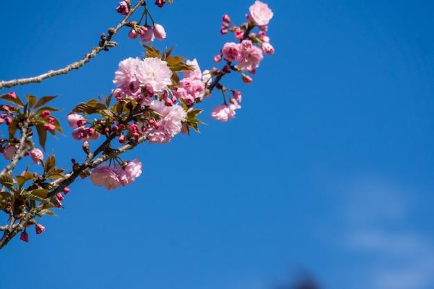 Lage hoek die van bloeiende bloemen onder een blauwe hemel is ontsproten