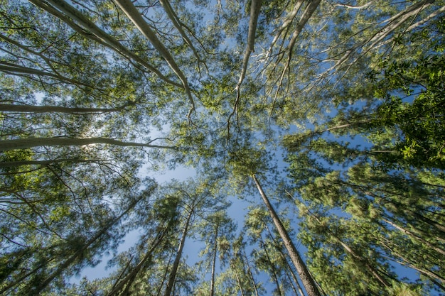 Lage hoek die van bomen in het bos is ontsproten