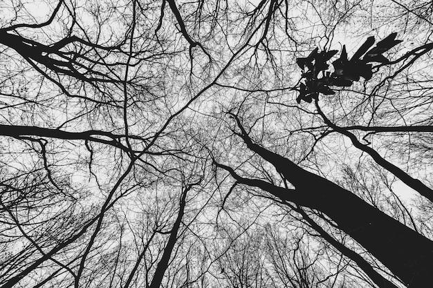 Lage hoek die van bomen in het bos overdag is ontsproten