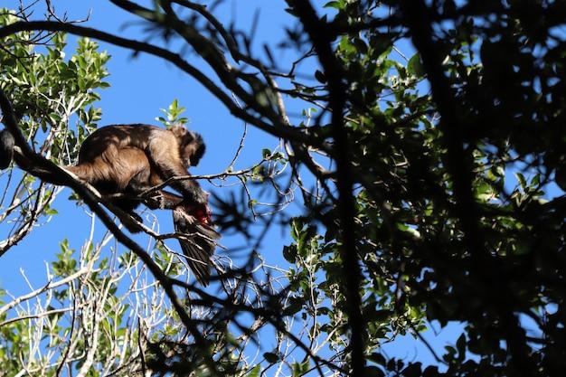 Lage hoek die van een aap is ontsproten die op een vogel op de tak van een boom in een bos jaagt