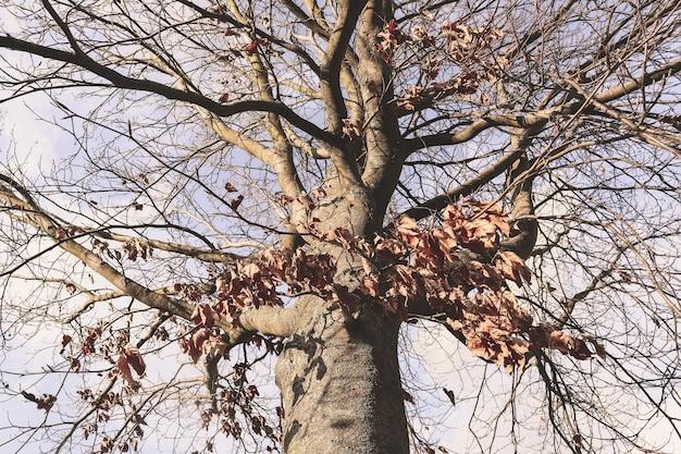 Lage hoek die van een bladloze boom onder een bewolkte hemel is ontsproten
