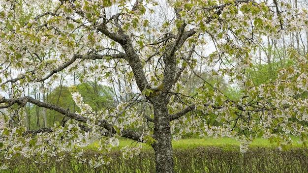 Lage hoek die van een boom is ontsproten die tijdens de lente bloeit