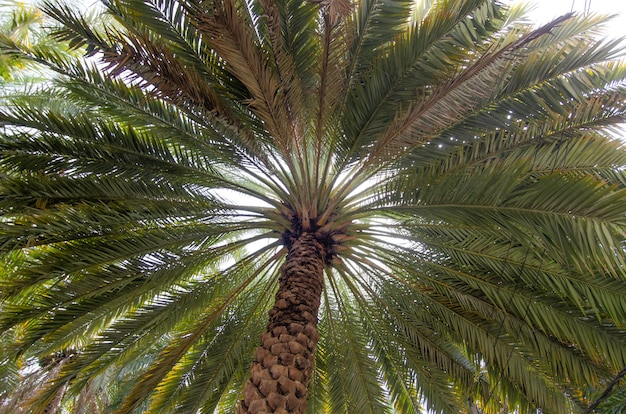 Lage hoek die van een brede lange groene palmboom is ontsproten