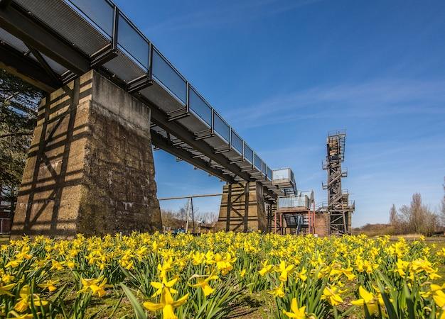 Lage hoek die van een brug over een deken van gele bloemen met een duidelijke blauwe hemel is ontsproten