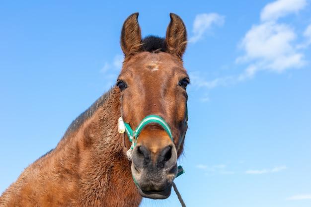 Lage hoek die van een bruin paard is ontsproten dat overdag de camera onder het zonlicht bekijkt