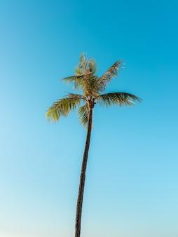 Lage hoek die van een hoge palmboom onder een heldere hemel is ontsproten
