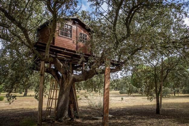 Lage hoek die van een houten boomhut met vensters in het midden van een bos onder een blauwe hemel is ontsproten