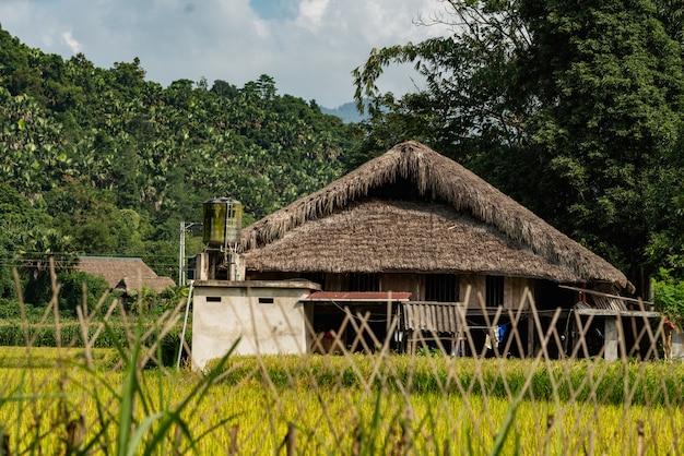 Lage hoek die van een houten gebouw in een boombos is ontsproten in vietnam onder de bewolkte hemel