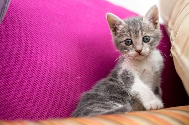 Lage hoek die van een leuk katje is ontsproten, zittend op de bank