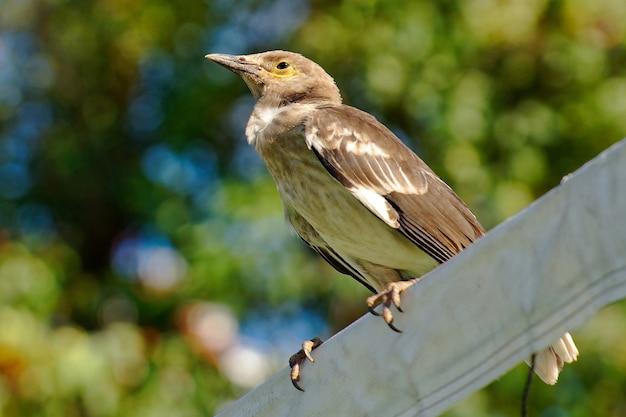 Lage hoek die van een leuke nachtegaalvogel is ontsproten die op een paal wordt neergestreken