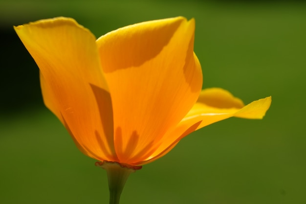 Lage hoek die van een mooie bloem met een vage achtergrond is ontsproten