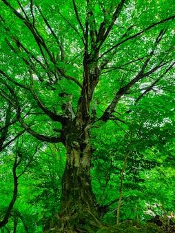 Lage hoek die van een mooie grote hoge boom in een bos met dikke bladeren en takken is ontsproten
