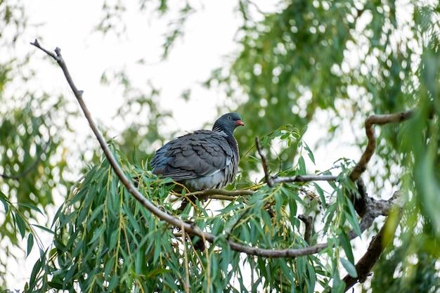 Lage hoek die van een vogel is ontsproten die overdag op de tak van een boom zit