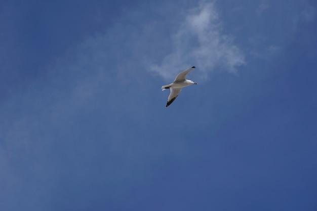 Lage hoek die van een zeemeeuw is ontsproten die overdag in een duidelijke blauwe hemel vliegt